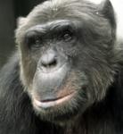 Austria Chimp Challenge